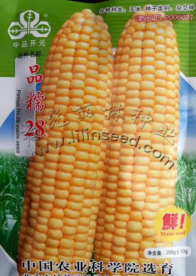 品糯28号黄色糯玉米杂交种