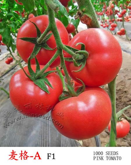 耐热粉果番茄种子-麦格-A